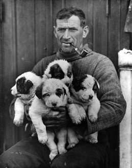 Tom Crean with a litter of pups born aboard The Endurance.